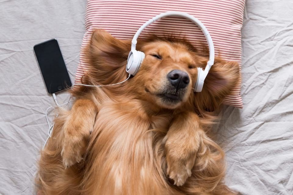 Calm piano music has a positive effect on pets