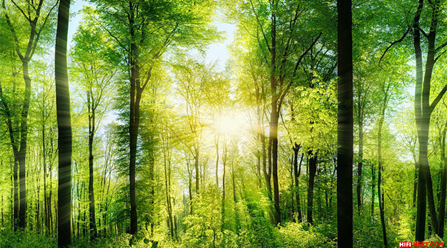 Study: sounds of nature have a positive effect on health